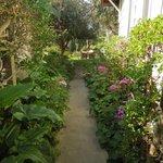 Walkway to garden