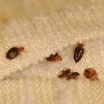 Bed bugs and disgusting mattresses!