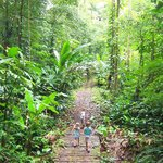 Adventure walk on the jungle path