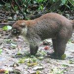 Rain forest animal