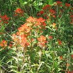 trails full of wild flowers