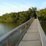 Bridge across the estuary
