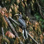 grey hornbill in front of bungalow