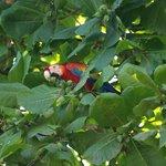 Ara Papageien im Garten