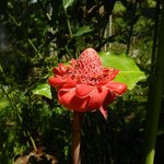 One of the flowers in the gardens