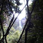 Blue Mountains Rain Forest