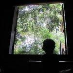 Uma janela para a natureza
