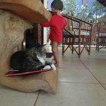 Um dos gatos recepcionistas