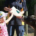 Feeding Bobby the Calf his milk