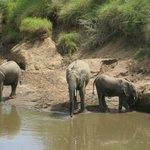 elephants bathing infront of bar area