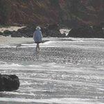 A gentle stroll on the beach