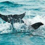 Tale splash of a school of dolphins.