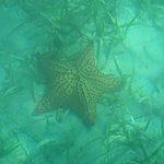 Make a wish..its a starfish and very beautiful.