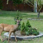Oops, ya caught me eating the plants again!
