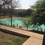 Texas Swimming.