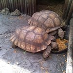 Tortoise display