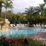 Pool - Vacation Village at Weston