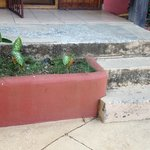 Mold on cement steps