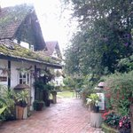 Tea Garden Area