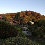 View across motel to the Kauri block & Pa bush walk