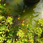 Fish pond by reception