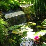 le bassin du petit jardin ombragé où on prend le petit déjeuner