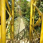 Rain forest skywalk swinging bridge
