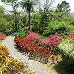 Pura Vida Garden