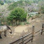 Seagate Horses