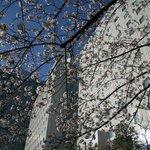 Photo of New Otani Inn Tokyo