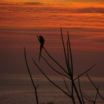 Macaw at sunset