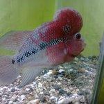 Fish with Tumor like lump
