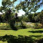 Swimmingpool + garden