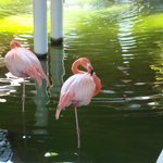 These flamingos also were right near the restaurants, just haning out