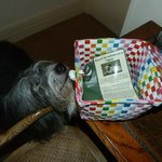 Happy dog finds doggie welcome pack!