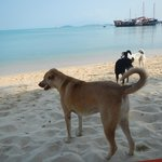 Lala resort dog and friends