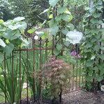Gardens at Birdwood
