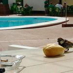 Friendly Birds eating bread off our patio table