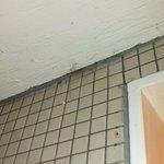 Cobwebs in shower