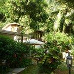 Jardin et Girasole