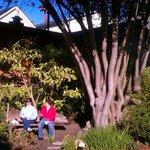 Tree In Front Garden