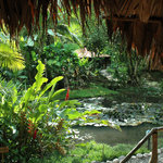 The tropical garden attracts more than 200 bird species