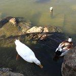 duck duck no goose