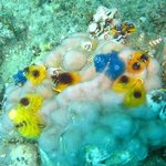 Dive with the Great Sea Reef Divers at Palmlea Lodge