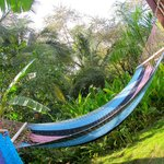 Hammocks near the pool