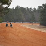spring training for horses , mile track