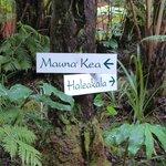 Path to lodge
