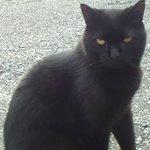 Friendly resident cat