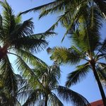 coconut trees aplenty