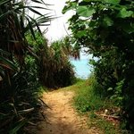 浜への道のり